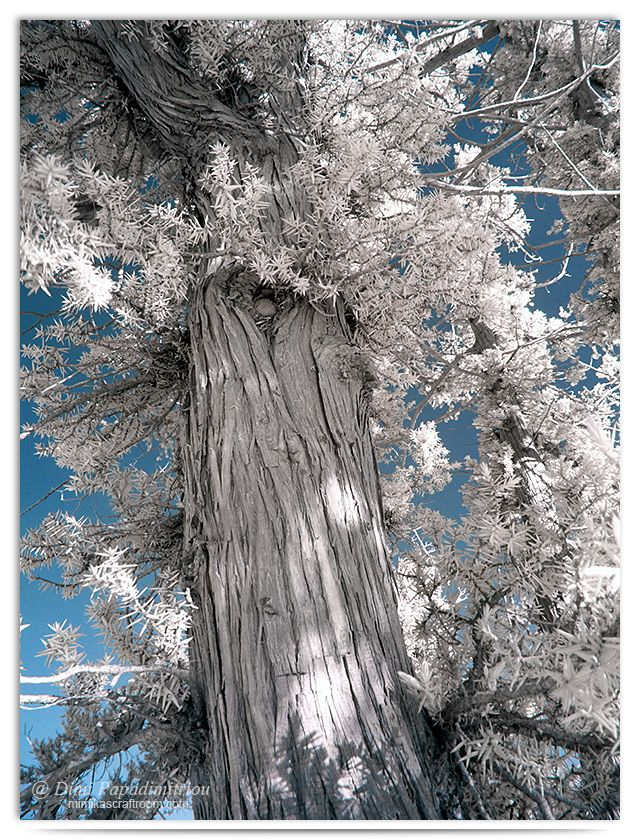 Branch - infrared by LightSculpting.deviantart.com on @DeviantArt
