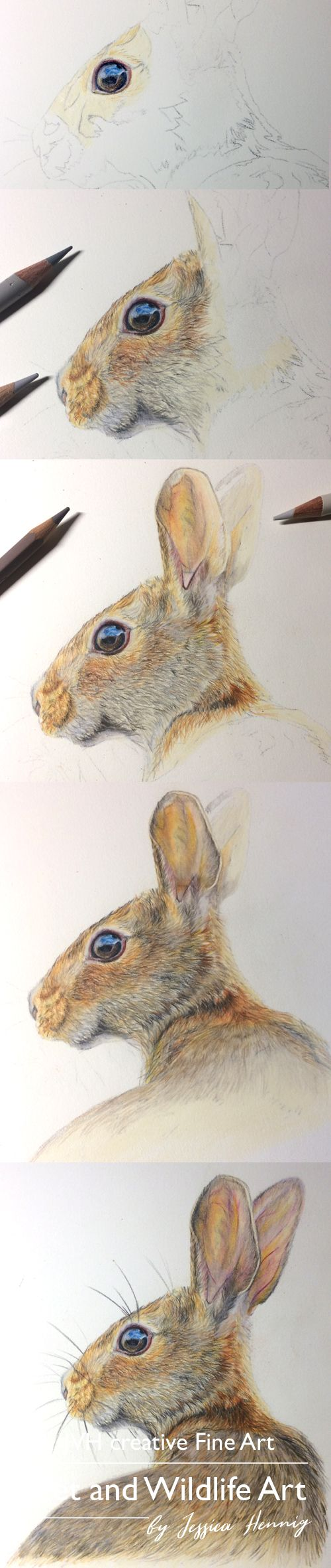 how to draw a snowshoe hare step by step