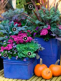 Bold Fall Mixed Containers, container gardening, landscaping, landscape gardening, landscape architecture