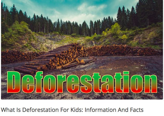 This website article provides an overview of facts about the causes and impact of deforestation