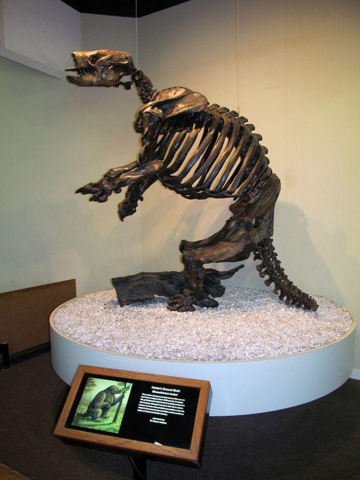 aka ground sloth this particular specimen was from the pleistocene