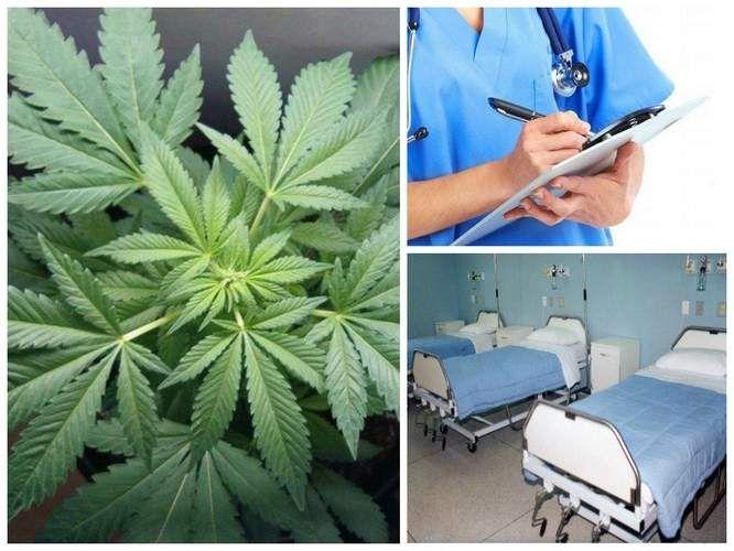 W Bydgoszczy rozpocznie się leczenie marihuaną.