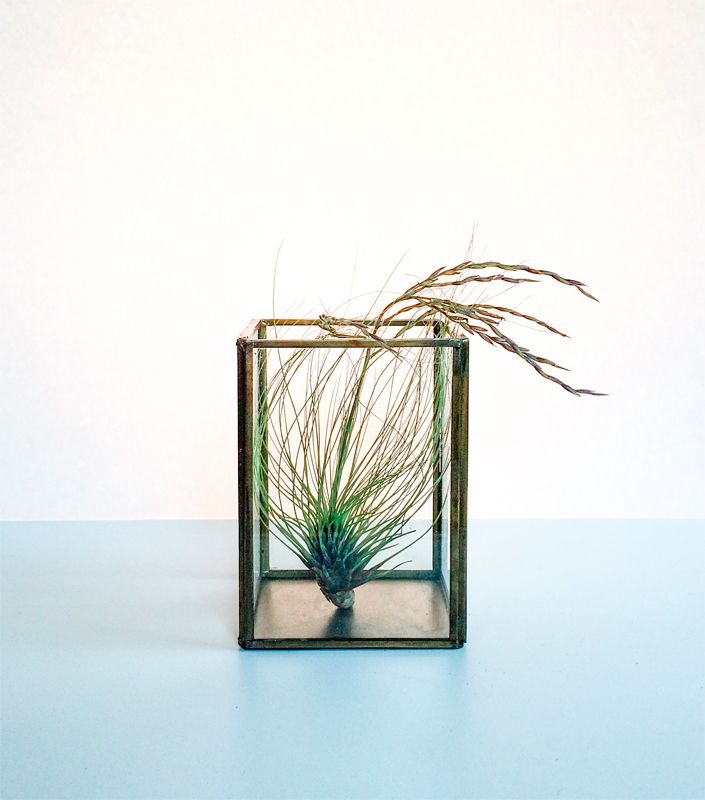 Decorative plant. Coming' up next at Upplandsgatan 36.