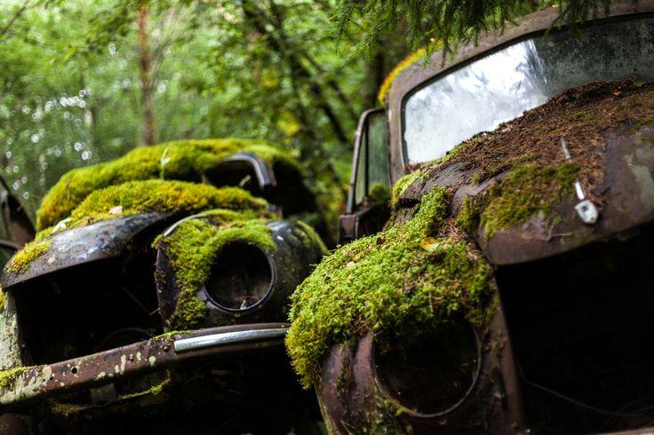un vieux cimetiere de voitures en suede 12   Un vieux cimetière de voitures en Suède   voiture vintage Suède seconde guerre mondiale photo m...
