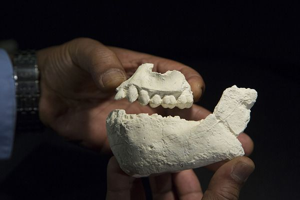 New hominid species may have been neighbor to famed 'Lucy' - CSMonitor.com