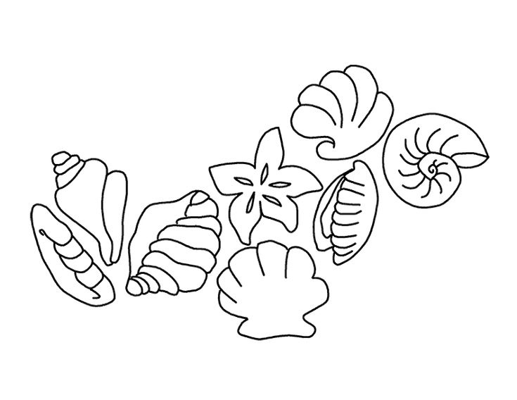 coloring pages of seashells | Seashells Coloring Pages - Free Printable Coloring Pages ...