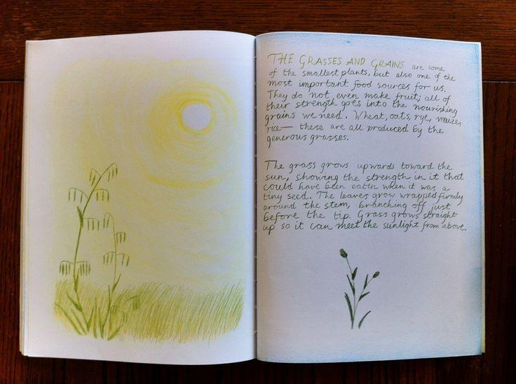 Waldorf ~ 5th grade ~ Botany ~ Grasses ~ main lesson book