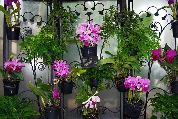 Como cultivar orquideas silvestres en casa - Como-CultivarComo-Cultivar