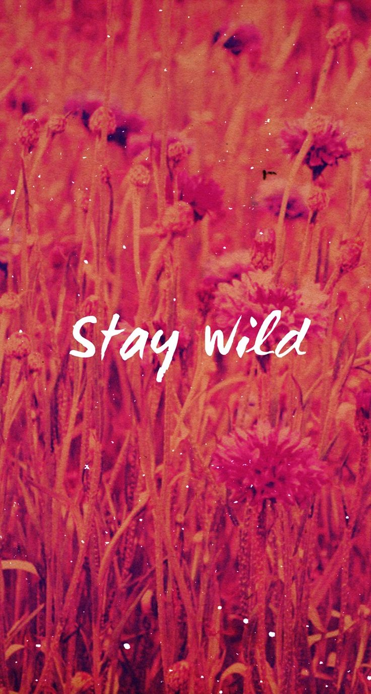 Stay Wild - iPhone wallpaper @mobile9