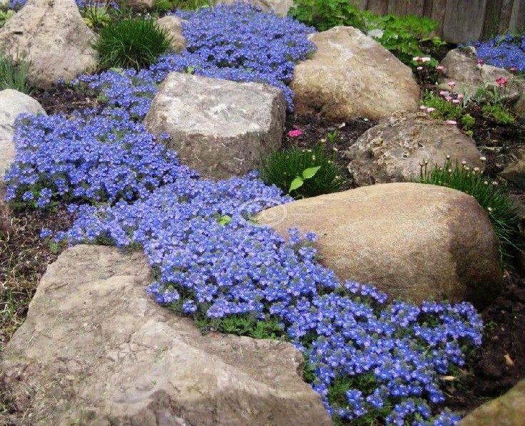 Landscaping Images For Backyard