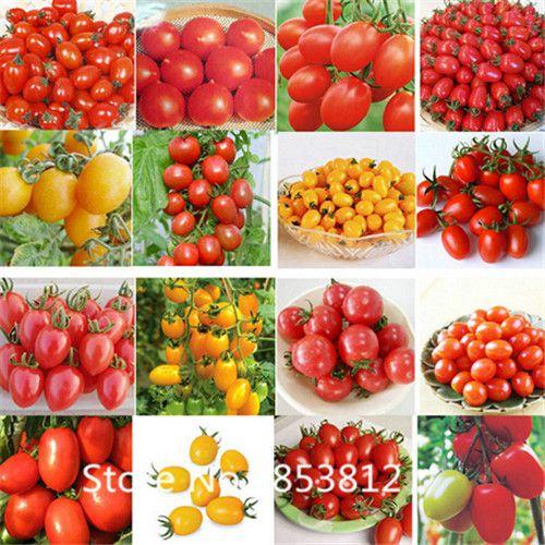 Купить товар300 частей 16 цветов томат семена сад цветы овощ семена для сад в категории Карликовые деревьяна AliExpress. Free Shipping  100pcs Blueberry Seeds, fruit tree seeds, DIY Garden fruit seedsUSD 0.64/lotFree Shipping. 100pcs/pack re