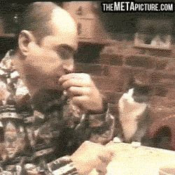 Please, sir, may I have some? | maybe I'll teach the cat, too haha