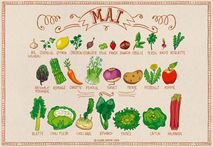 Calendrier des fruits et légumes de saison du moi de Mai. Pissenlit