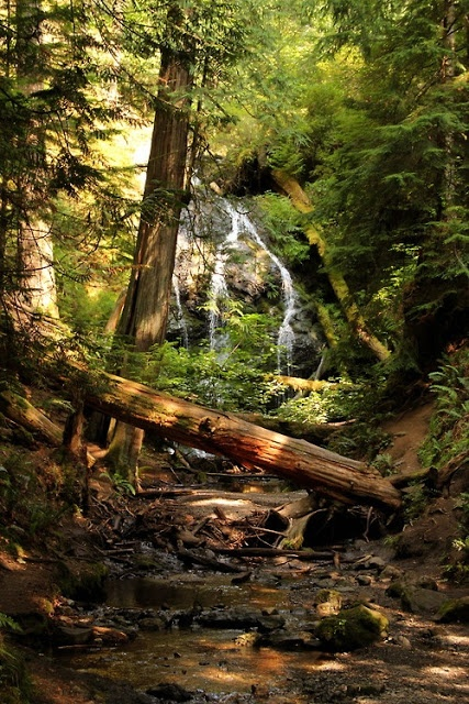 Forest Waterfall, The Redwoods