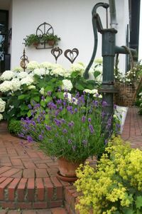 steht unsere alte Pumpe nun vor der Haust?re.Umspielt von Lavendel,Frauenmantel und Annabelle f?hlt sie sich ganz wohl :-)))