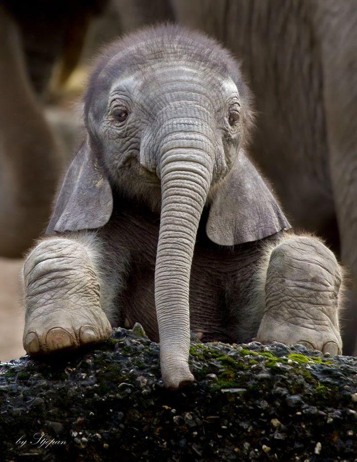 Elefanten Finden Menschen Süß