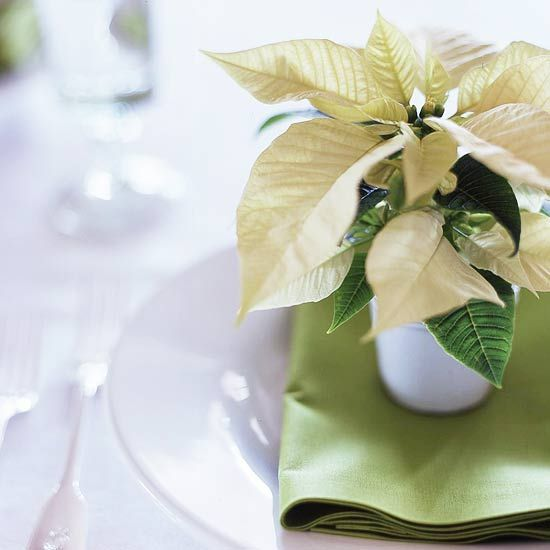 Tips for Taking Care of Holiday Poinsettia Plants: Tuesday Ten - bystephanielynn