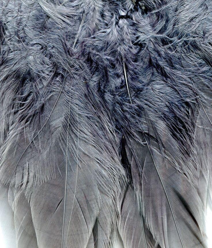 Vacht van een vogel:  de structuur bestaat uit veren, de textuur is zacht.