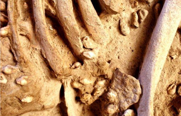 ARKEOFİLİ ///  7000 Yıllık Adamın Deniz Kabukları ve Dişlerden Oluşan Kıyafeti Vardı