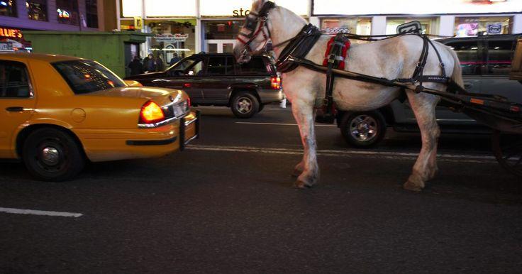 Por que os cavalos que puxam carroças usam cabrestos?. Cabrestos são um dos equipamentos usados em muitos cavalos. São pequenos quadrados de couro que são presos à cabeça do cavalo e mantêm seu olho focado no que vem à frente, e não aos lados ou atrás.
