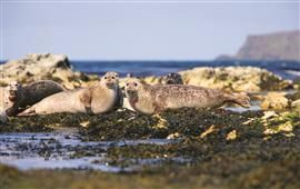 Seal spotting, Rathlin