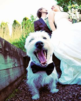 Here comes the bride... and her dog.