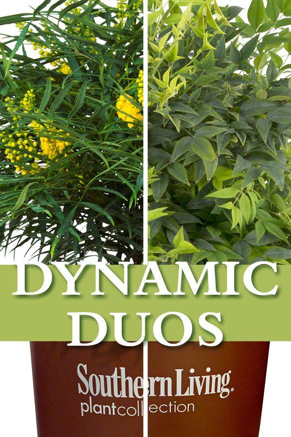 Dynamic Duos Garden Inspiration Spring Plants Plants Garden Design