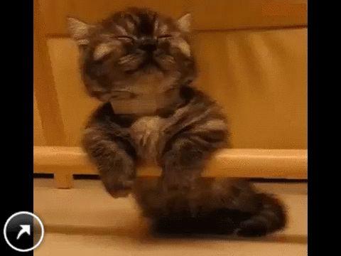 сонный котёнок