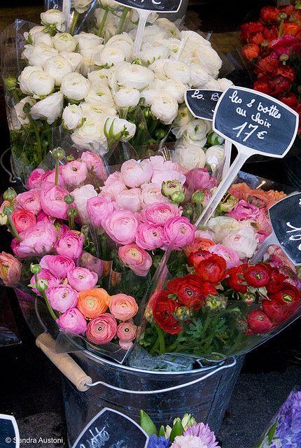 Flower market, Paris  The oldest Parisian flower market Place de la Madeleine #ranunculus #pink #red