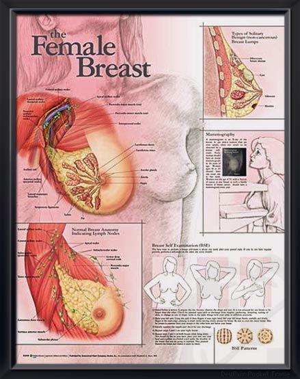 Bdsm femdom stories collars dominating males