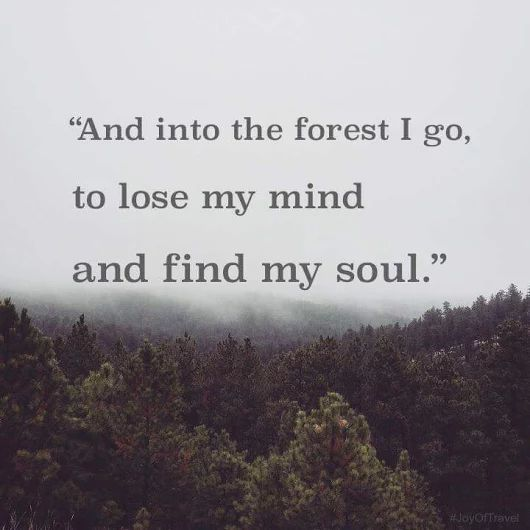 And into the forest i go, to lose my mind and find my soul
