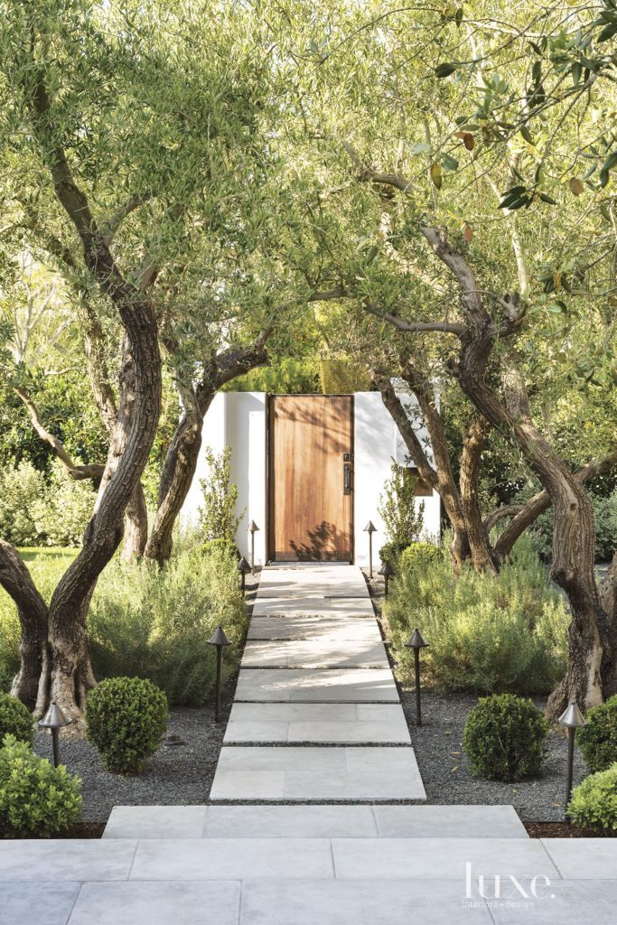 Beverly Hills - limestone pavers with lavender and old-growth manzanilla olive trees.