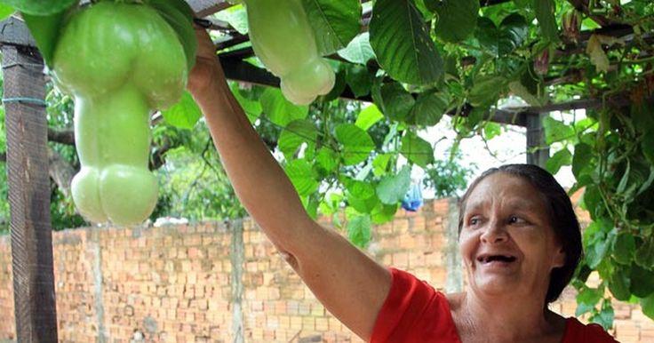 Dona de casa cobra R$ 2 para visitas ao pé de maracujá em formato fálico