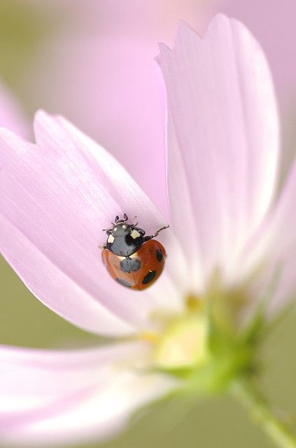 327 Best Images About Ladybugs On Pinterest Ladybird
