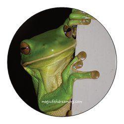 Sticker Design - http://magicfishdreaming.com