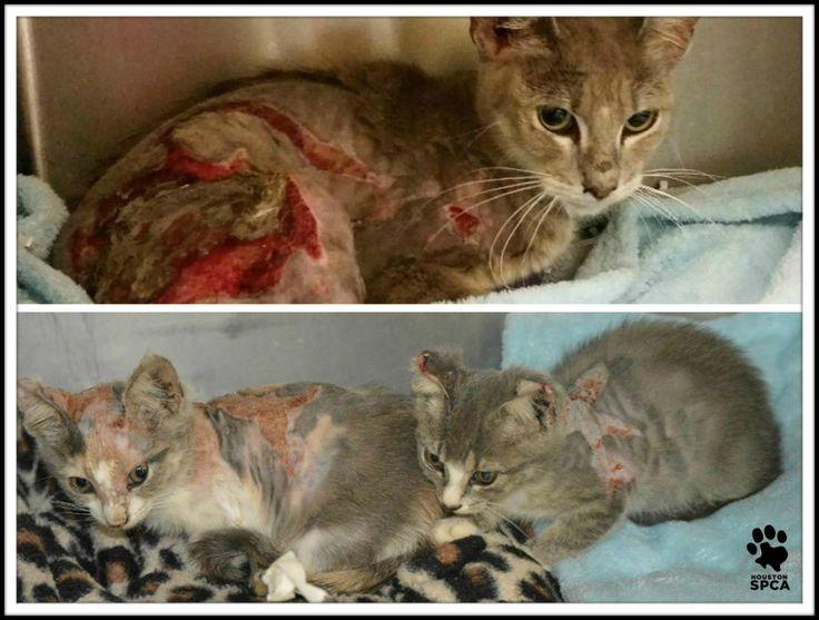 $5,000 Reward Offered in Horrific Animal Cruelty Case ...