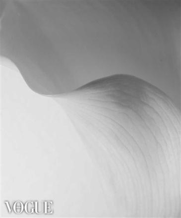 Dalia flower by Jure Klen