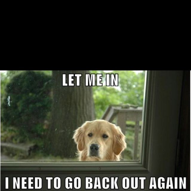 This is what my dog Monte does all the time.The Doors, Laugh, Dogs, Pets, True, Funny Stuff, Animal, Golden Retriever