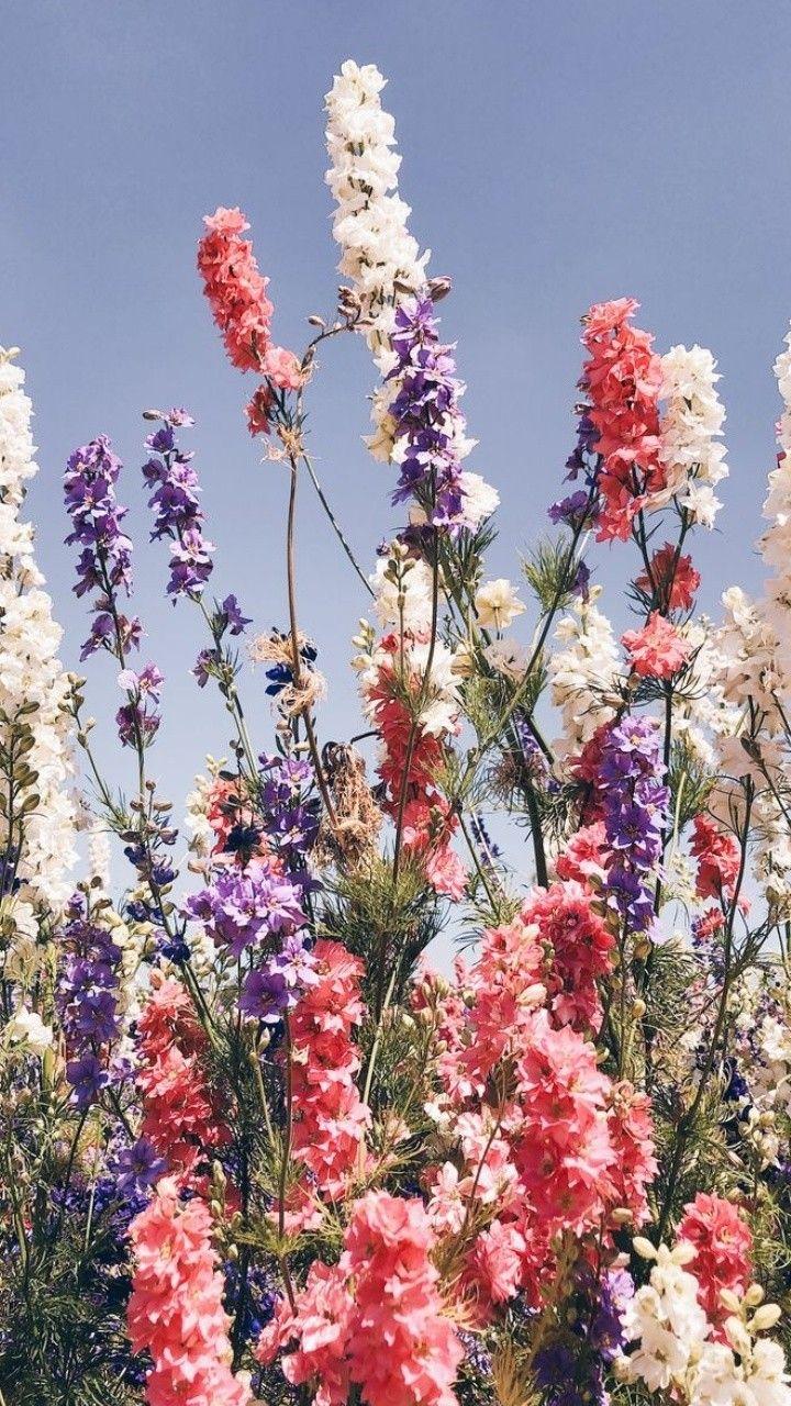 Vesna Oboi Oboinatelefon Oboinaajfon Spring Flowers Cvety