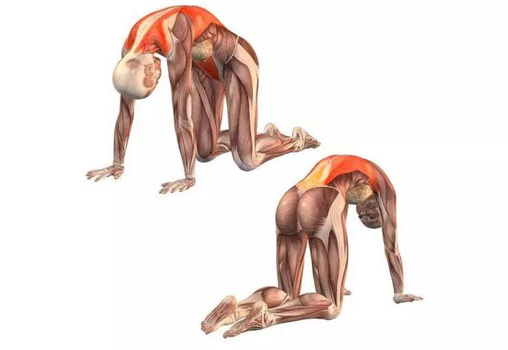 Фасциальная гимнастика (физические упражнения и лечебная физкультура)