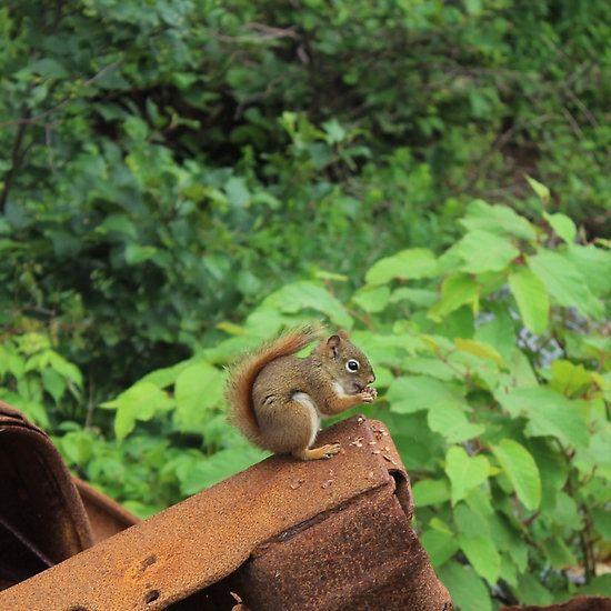 Camo Squirrel