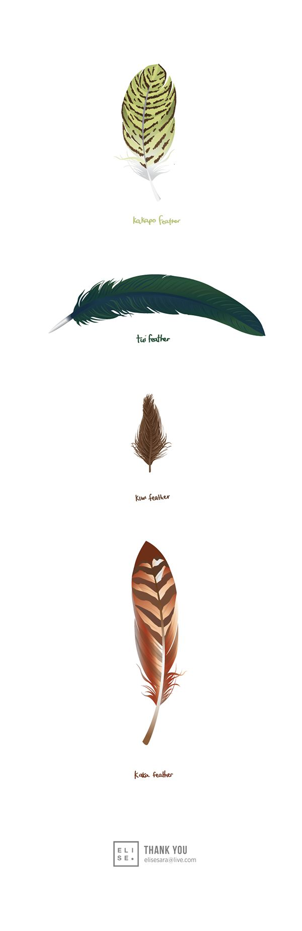Native New Zealand Bird Feathers