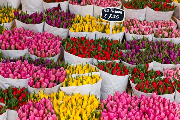 Colourful fresh tulips for sale at the Flower Market, known locally as Bloemenmarkt