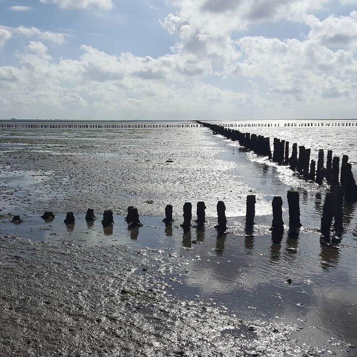 Waddenland is the name of a northern part in The Netherlands in the province Groningen. The beauty of this area is the Wadden Sea. Me and other bloggers were invited by the local tourist board to discover the natural beauty of this land. We went for some sailing and cycling  And for: spectacular mudflat hiking and sandbank yoga  Plus: good local food  See my blog post and video's on the website  TIP: next weekend there's lots of activities in the Wadden area. #dailygreenspiration…