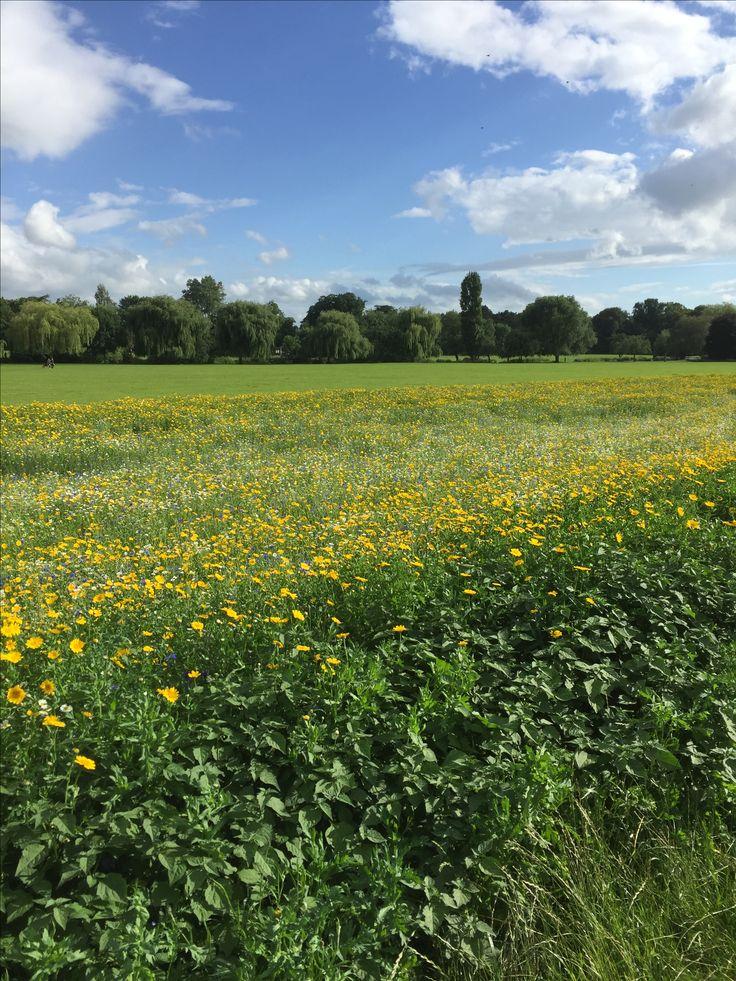 St Nicholas Park, Warwick, July 2016