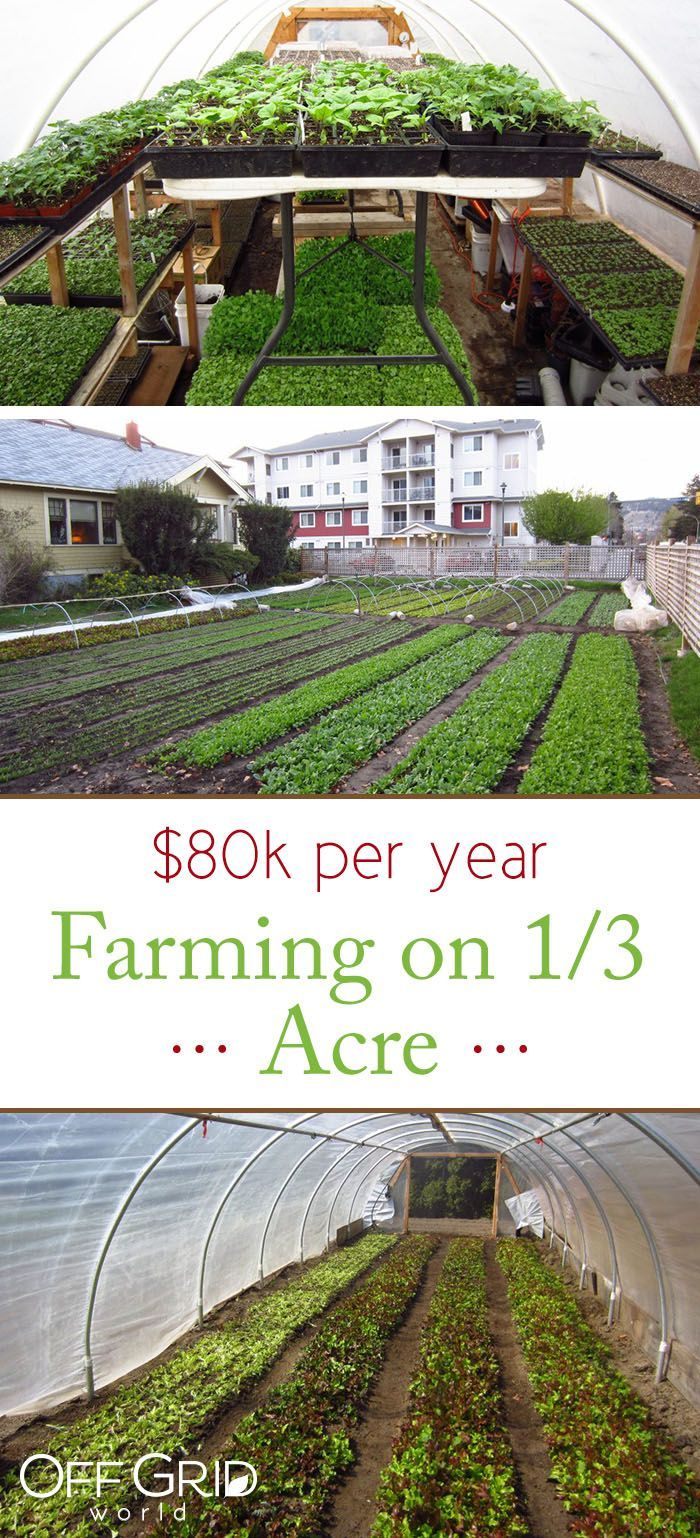 This man makes $80k/year farming on 1/3 acre  Square foot gardening