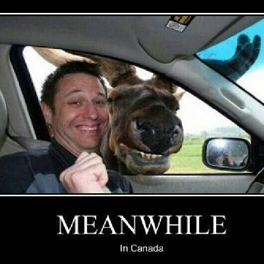 meanwhile in canada funny photo to brighten your day AWESOME