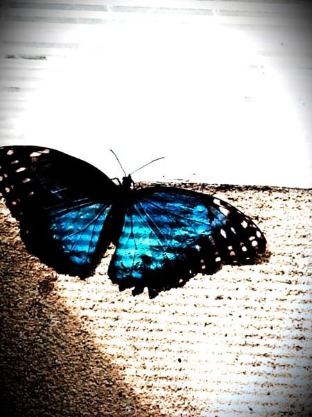 Butterfly,  acquario di Genova