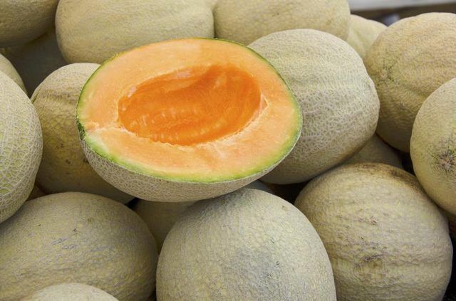Cantaloupe & Weight Loss