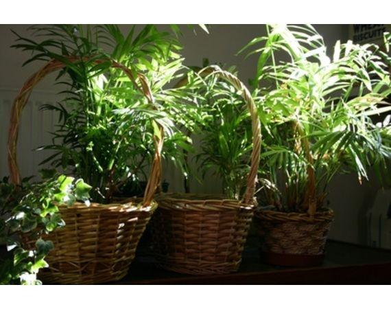 Perennials Rug Prices Green Sargent Juniper Buy Online